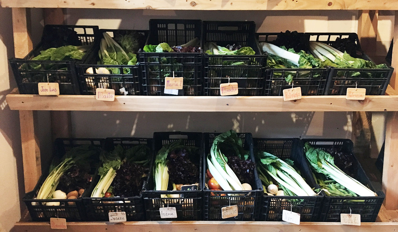 12 cestas de verdura ecológica casi listas para salir con el reparto