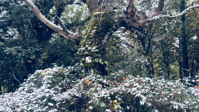 Detalle en invierno