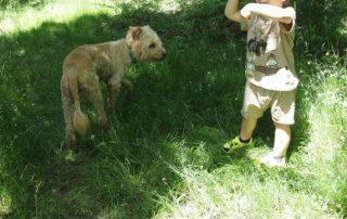 Casa rural cerca de Burgos que admite mascotas
