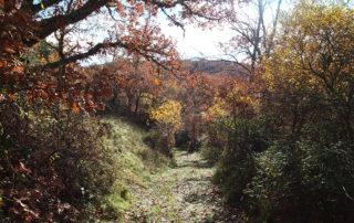 Casa rural en Burgos para hacer senderismo