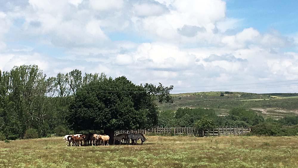Casa rural en Burgos en Top Rural